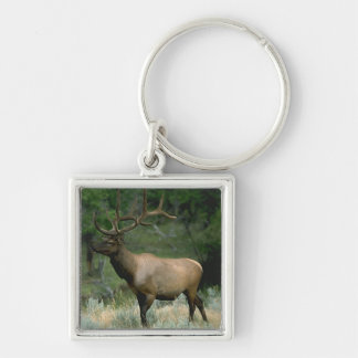 Beautiful Elk Silver-Colored Square Keychain
