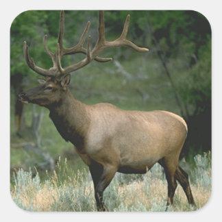 Beautiful Elk Stickers