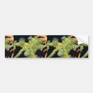 Beautiful Encrusting anemones attached to a sea fa Car Bumper Sticker