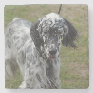 Beautiful English Setter Dog Stone Coaster