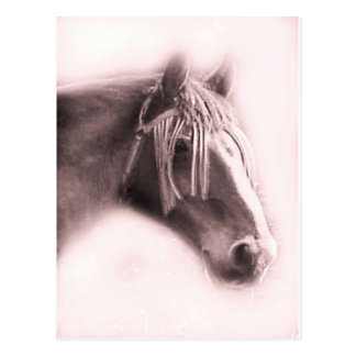 Beautiful Equine Postcard