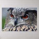 Beautiful Eurasian Eagle-Owl portrait Print