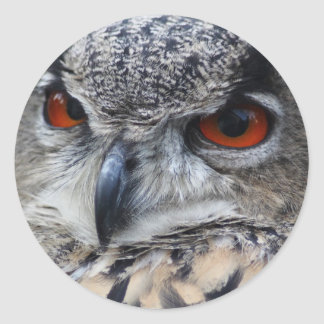 Beautiful Eurasian Eagle-Owl portrait Round Stickers
