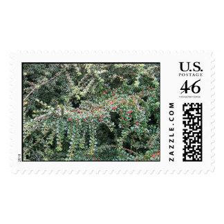 Beautiful Evergreen Stamp