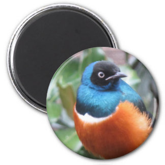 Beautiful Exotic Bird Perched Magnet