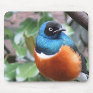 Beautiful Exotic Bird Perched Mouse Pad