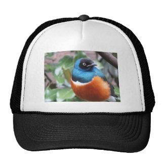 Beautiful Exotic Bird Perched Trucker Hat