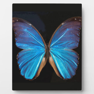Beautiful exotic blue butterfly display plaques