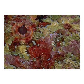 Beautiful Eye of a Galapagos scorpion fish 5x7 Paper Invitation Card