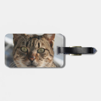 Beautiful Eyed Tabby Cat Luggage Tag