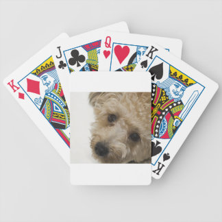 Beautiful Eyes of a Yorkie Poo Puppy Poker Deck