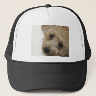 Beautiful Eyes of a Yorkie Poo Puppy Trucker Hat