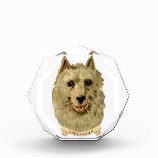 Beautiful Face portrait of a Pomeranian dog Award