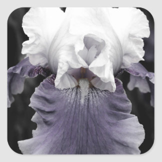 Beautiful faded purple iris print square sticker