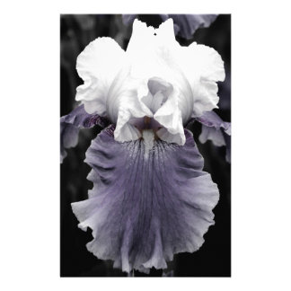 Beautiful faded purple iris print stationery