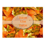 Beautiful fall color leaves save the date postcard post cards