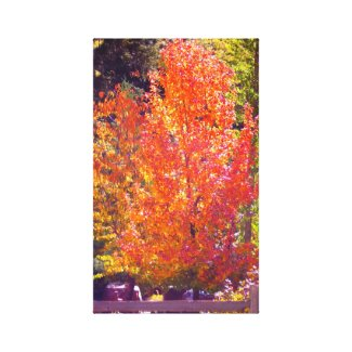 Beautiful Fall Colors 2 wrappedcanvas