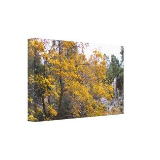 Beautiful Fall Colors wrappedcanvas