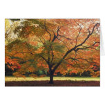Beautiful Fall Tree Greeting Card