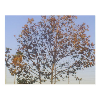 Beautiful Fall Tree Postcard