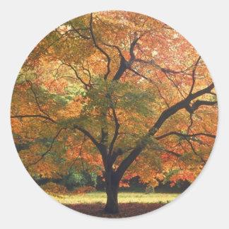 Beautiful Fall Tree Round Sticker