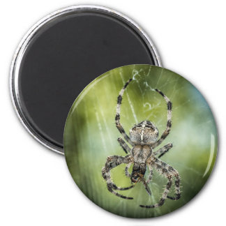 Beautiful Falling Spider on Web 2 Inch Round Magnet