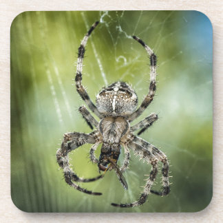 Beautiful Falling Spider on Web Drink Coaster
