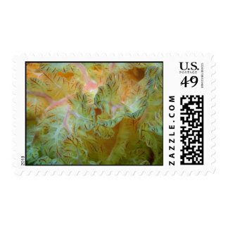 Beautiful Feathery gills of a Spanish dancer nudib Postage Stamps