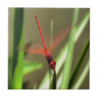 Beautiful Firecracker Dragonfly Tile
