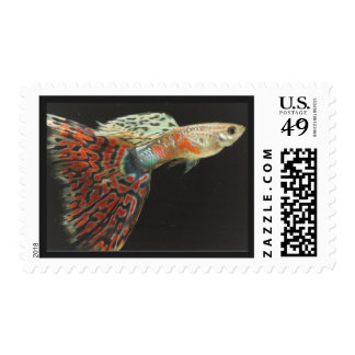 Beautiful Fish Postage Stamp