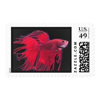 Beautiful Fish Postage Stamp