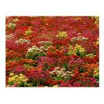 Beautiful floral postcard