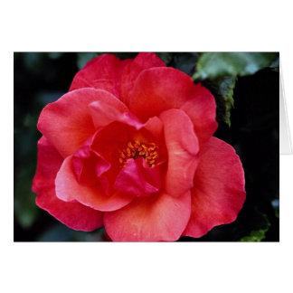 Beautiful Floribunda Greeting Card