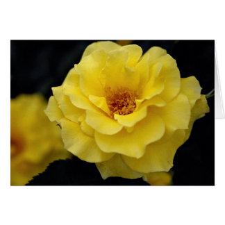 Beautiful Floribunda, yellow Greeting Card