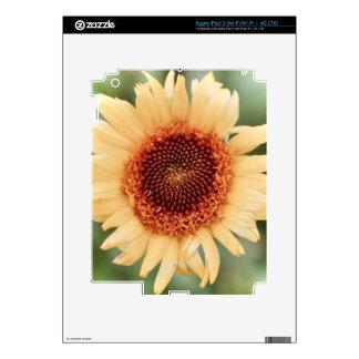 Beautiful Flower Gift iPad 3 Skins