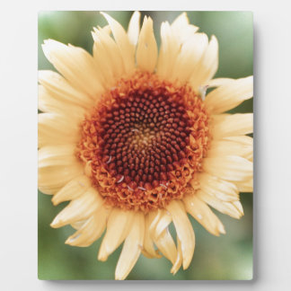 Beautiful Flower Gift Plaque