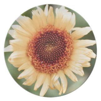 Beautiful Flower Gift Plate