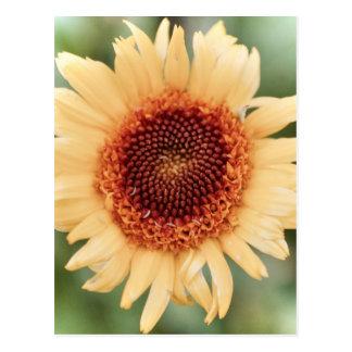 Beautiful Flower Gift Postcard