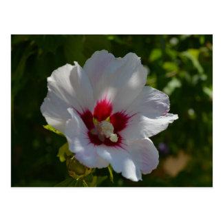 Beautiful flower in Corfu, Greece Postcard