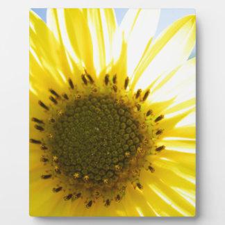 Beautiful Flower in the Sun Plaque