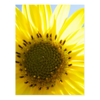 Beautiful Flower in the Sun Postcard