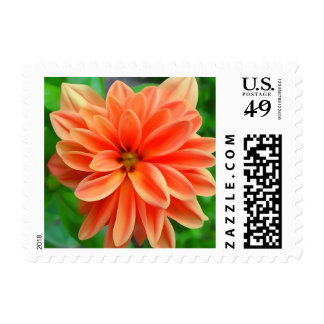 Beautiful Flower Stamps