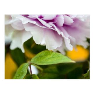 Beautiful Flower Postcard
