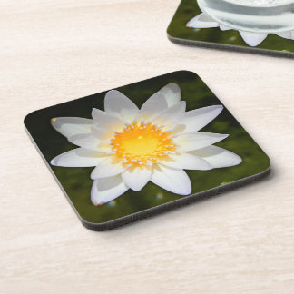 Beautiful flower white water lily drink coaster