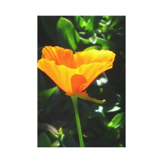 Beautiful Flower With Tail Gallery Wrap Canvas