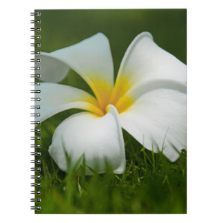Beautiful Flowers Close-Up - Notebook