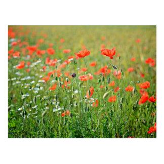 Beautiful flowers fields postcard