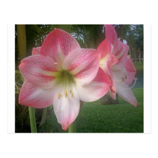Beautiful Flowers from Florida Postcard