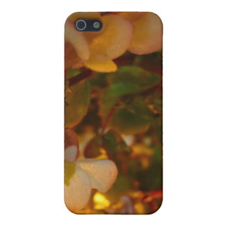 Beautiful Flowers In The Sun Cover For iPhone SE/5/5s