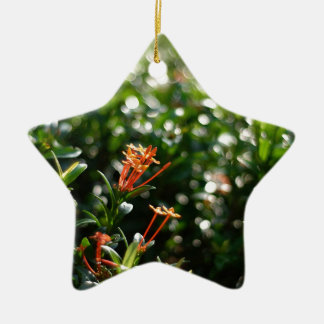 Beautiful Flowers In The World 03 Double-Sided Star Ceramic Christmas Ornament